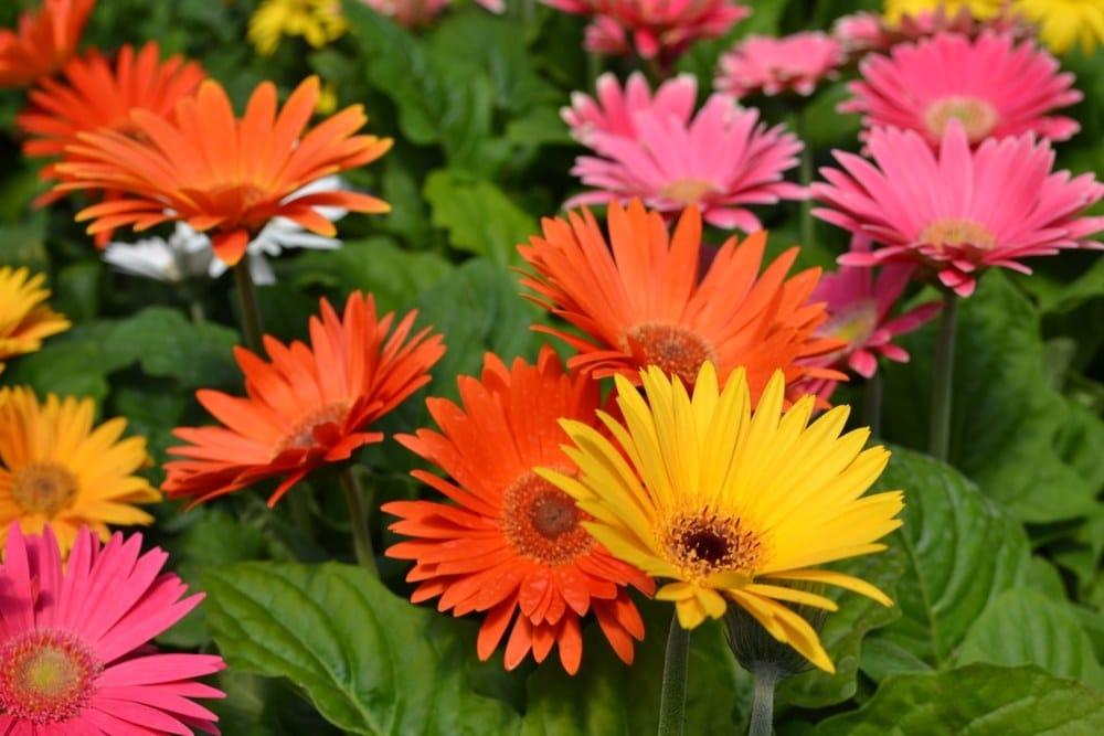 Vybírejte pokojové rostliny, které si zamilují i děti