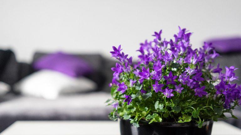 Jak s fialovou barvou v interiéru vyzdobit obývací pokoj?
