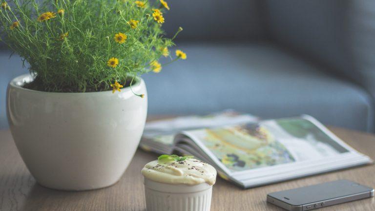 Pěstování květin v bytě. Jaké jsou nejvhodnější?