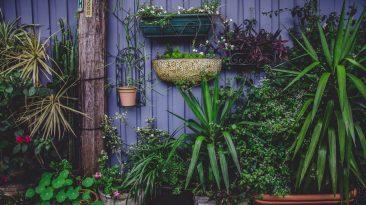 Připravte si zahradu na zimu