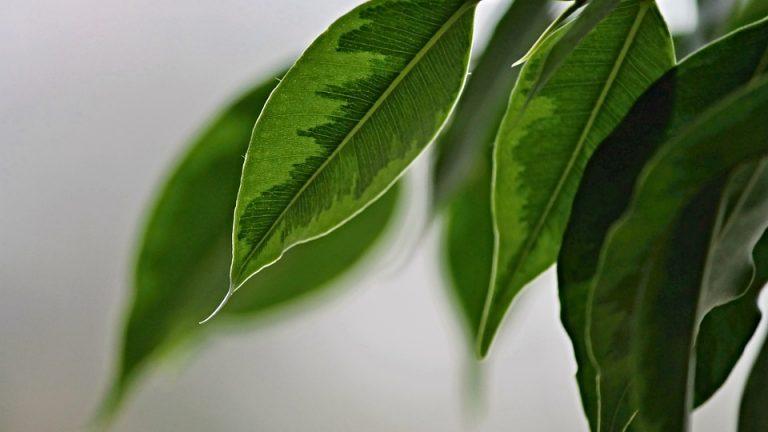 Neinvestujte do čističky vzduchu. Pokojové rostliny pročistí vzduch za ni!