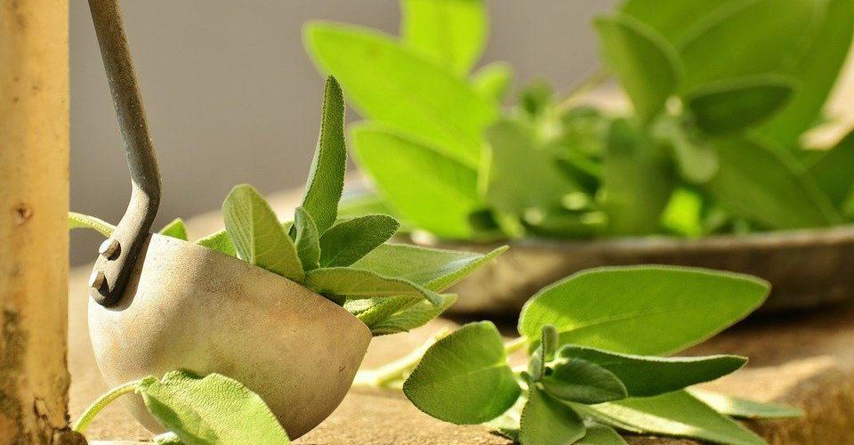 Šalvěj patří do bylinkové zahrádky. Její pěstování navíc není náročné