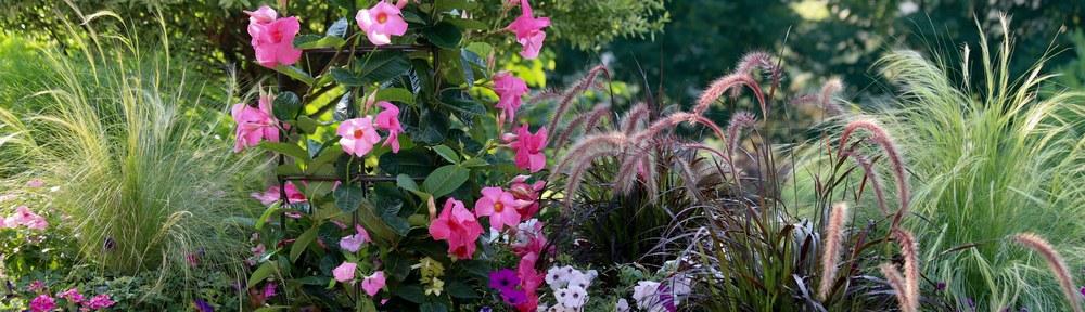 Ozdobné trávy se hodí do každé zahrady