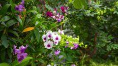 Venkovní orchideje dopomohou vykouzlit jedinečnou okrasnou zahradu