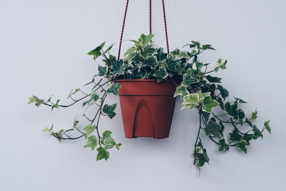 Vhodná rostlina v ložnici zlepšuje vzduch, nevhodná může stát za nechutí k sexu