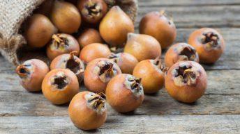 Poznejte mišpule a sklízejte ovocnou úrodu i v zimě